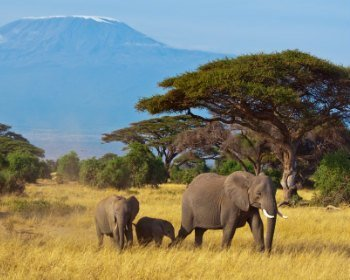 Amboseli Nationalpark, Kenia